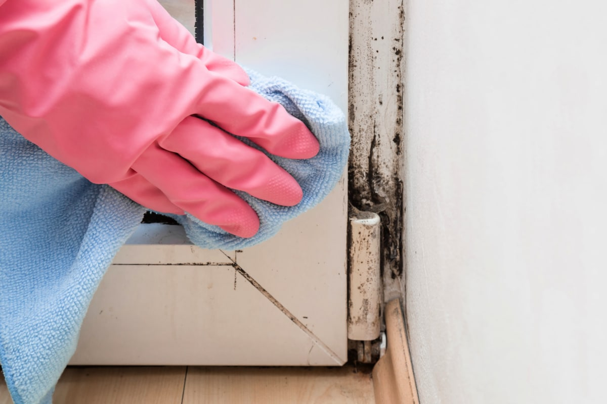 Hand in rubber glove using microfiber cloth to clean dark mold in corner of wood window frame