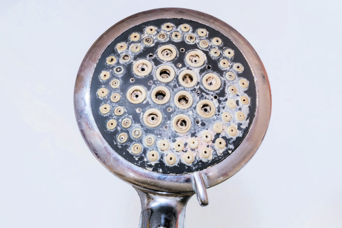 Closeup of mineral buildup and mold on dirty shower head.