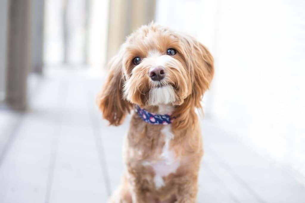 A cute dog stares into the camera
